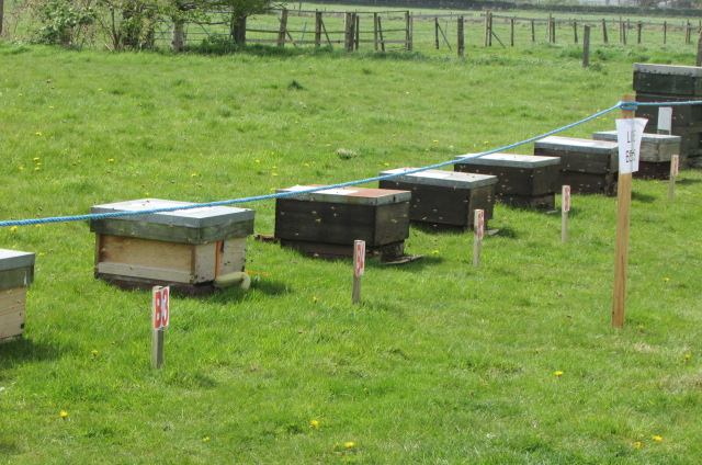 Bee colonies for sale
