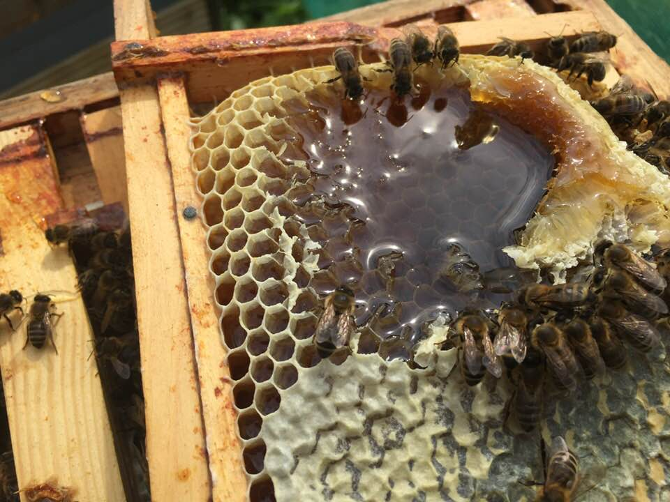 images showing honey on a frame