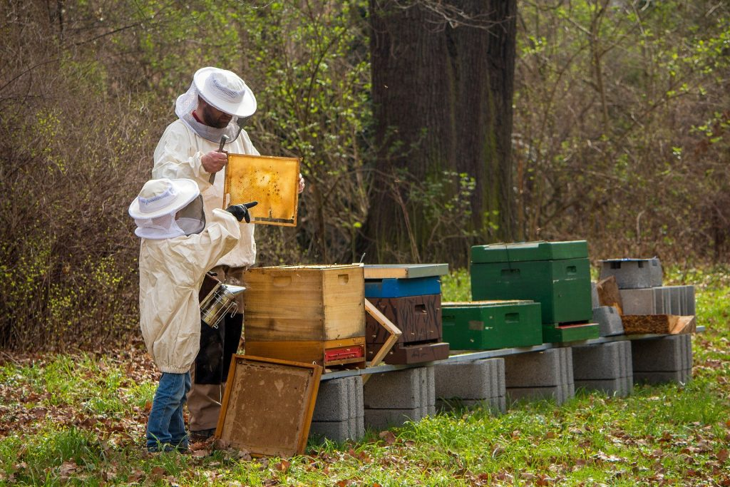 image showing an afult and a child beekeeper