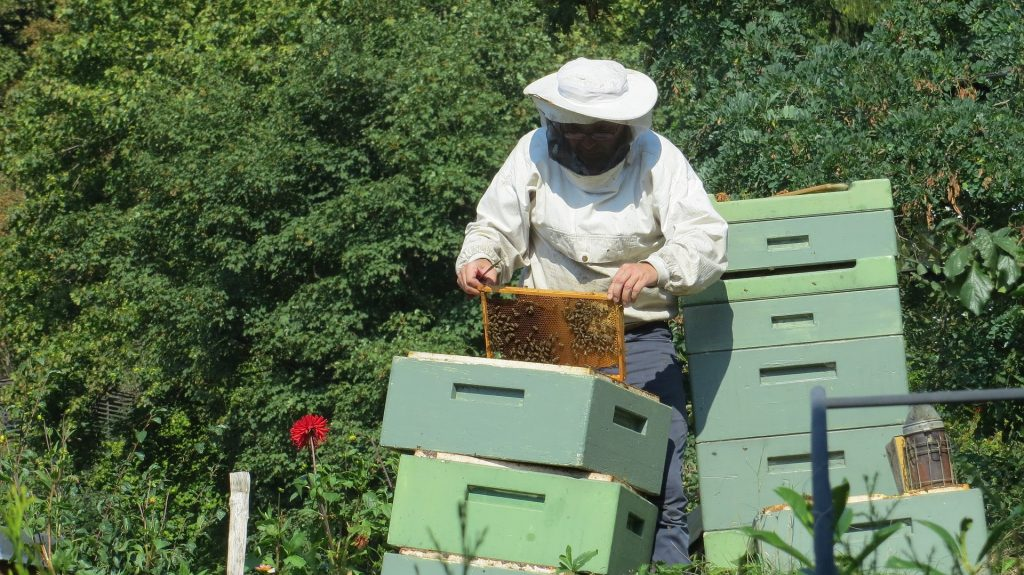 image showing a beekeeper in front of green hives
