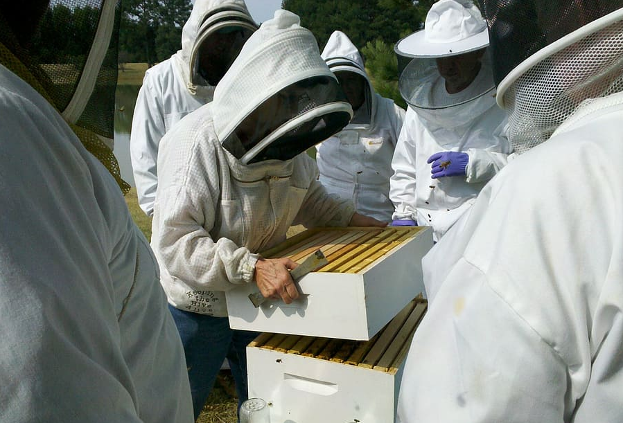 group of beekeepers inspecting a hive