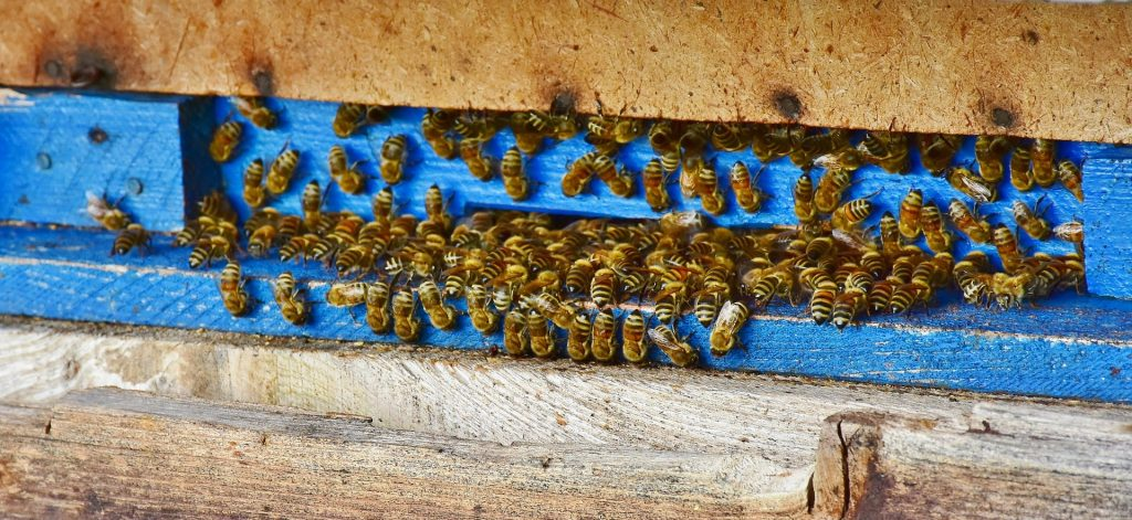 image showing bees clustered around the hive entrance
