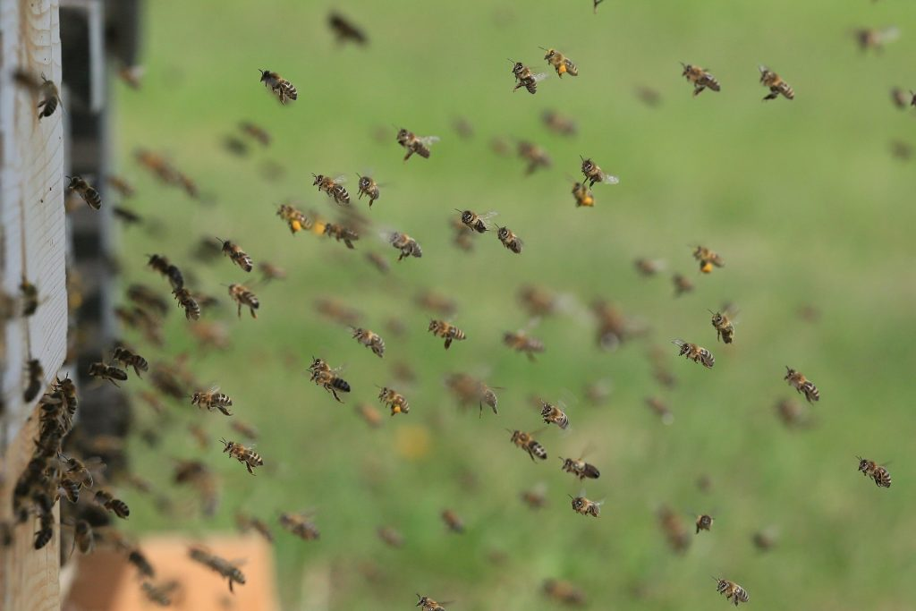 image showing flying bees