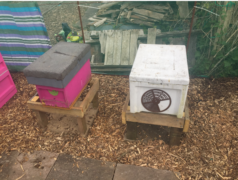 image showing nuc in position on hive stands