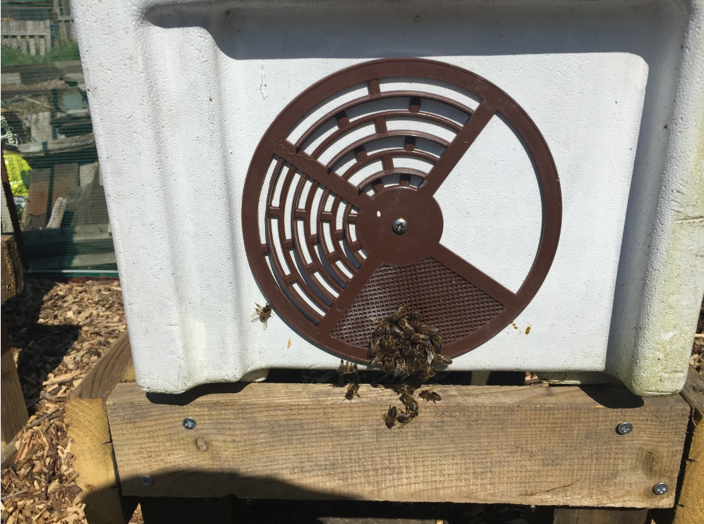 image showing cluster of bees around the white nuc entrance