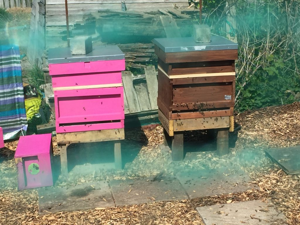 image showing the hives in situ after the transfer