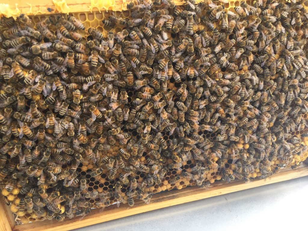 image showing a frame of calm and quiet bees