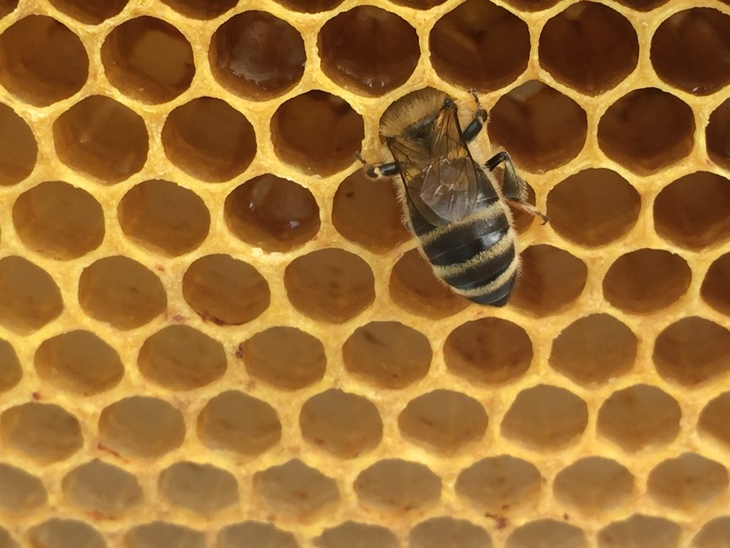 image showing a bee head down in a cell