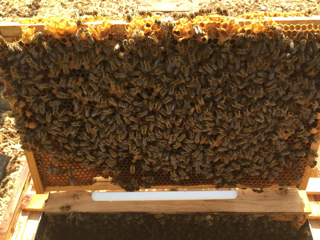 image showing a frame full of bees