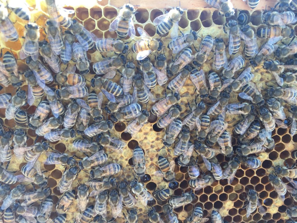 image showing a large amount of bees on a frame