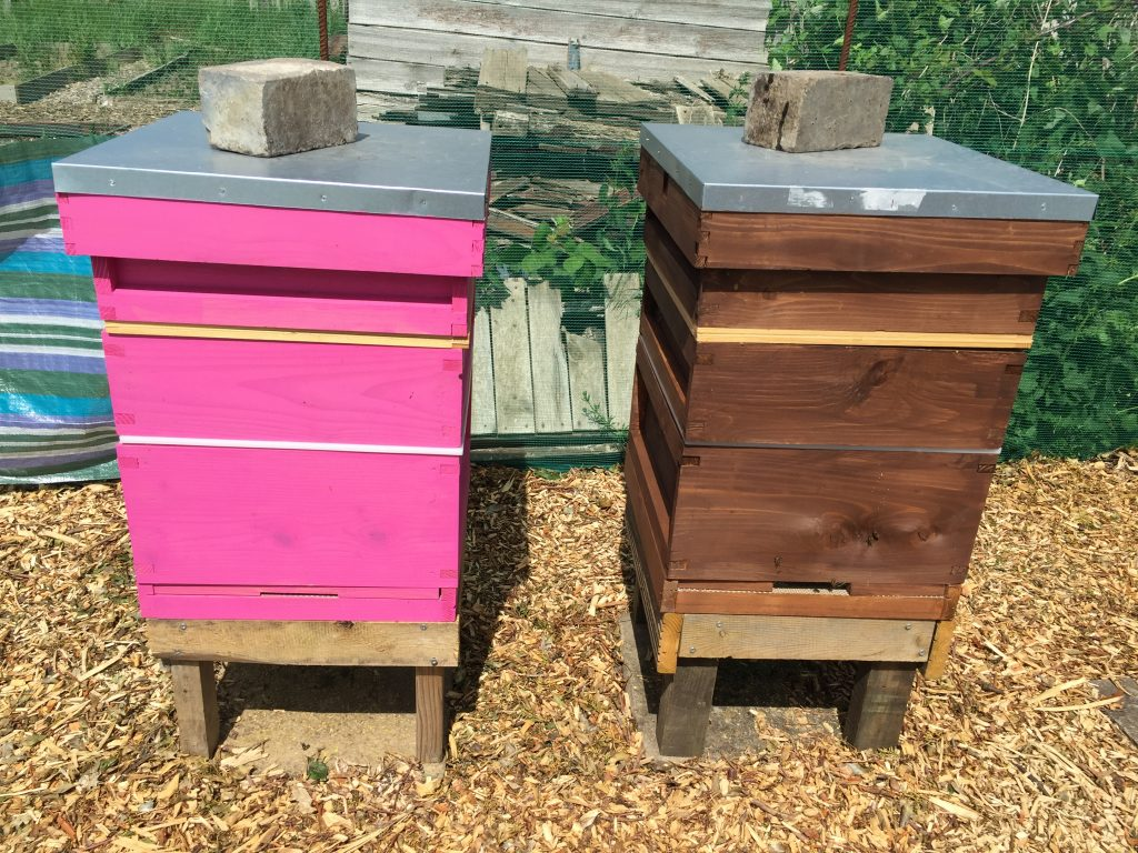 image showing the pink and the brown hive