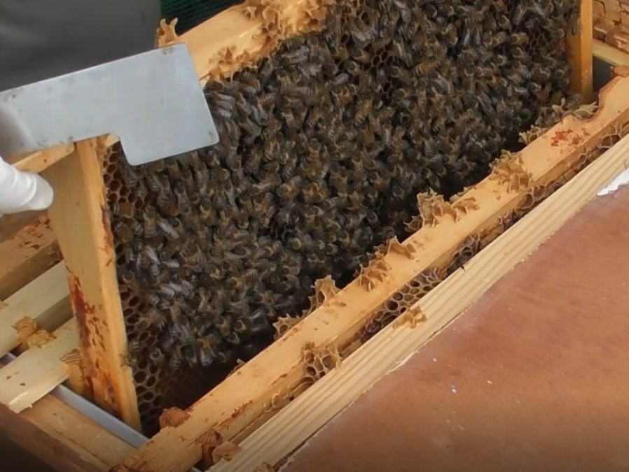 image showing a frame being lifted from the brood box