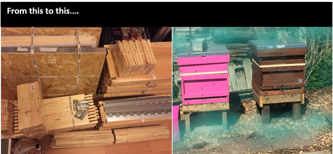 image showing prgress from flat pack hive parts to constructed hives