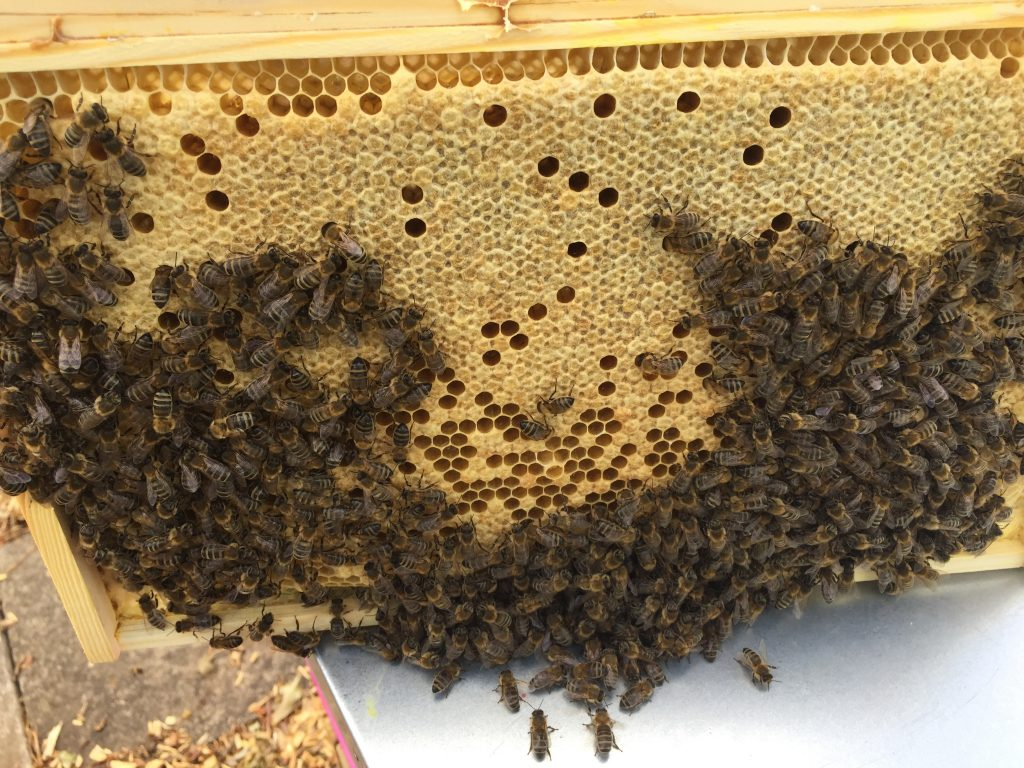 image showing a full frame of capped brood