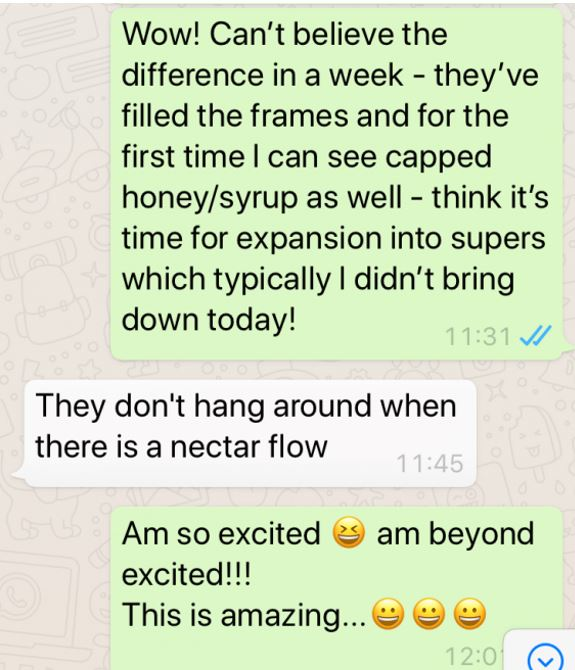 image of text message saying how well the bees seemed to be doing