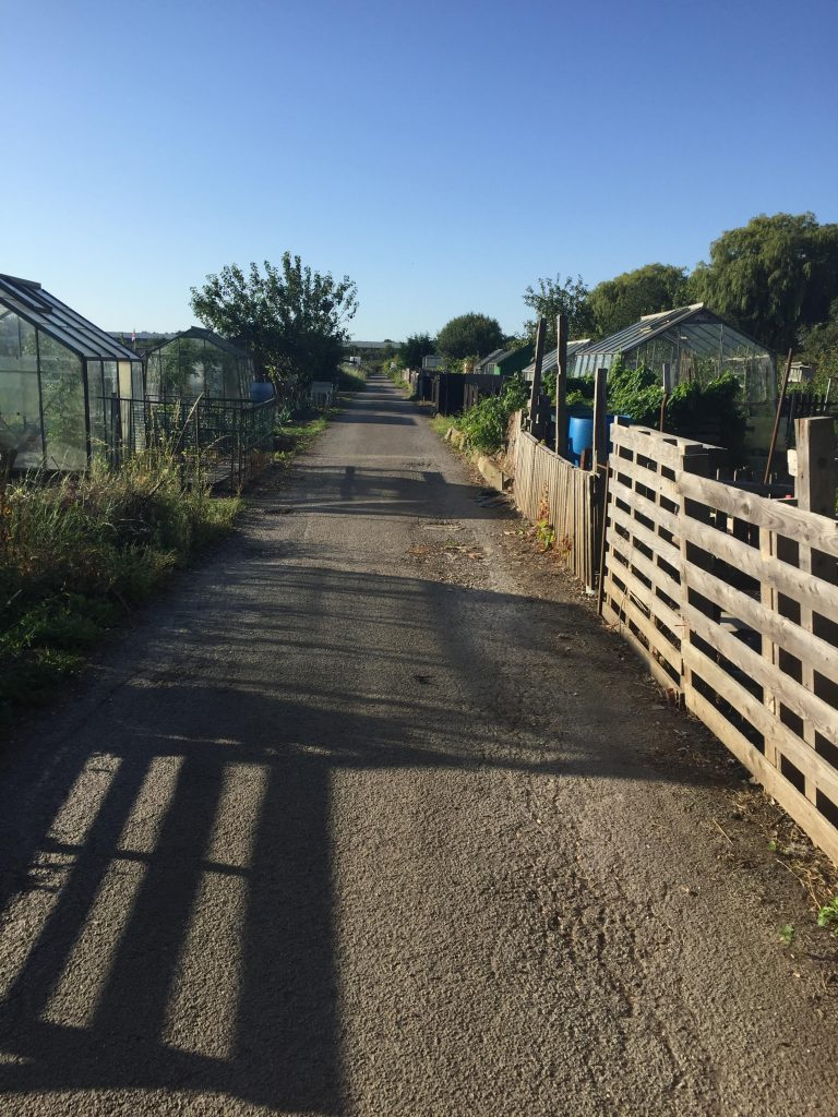 image showing the road through the allotments with shadows in the sunshine