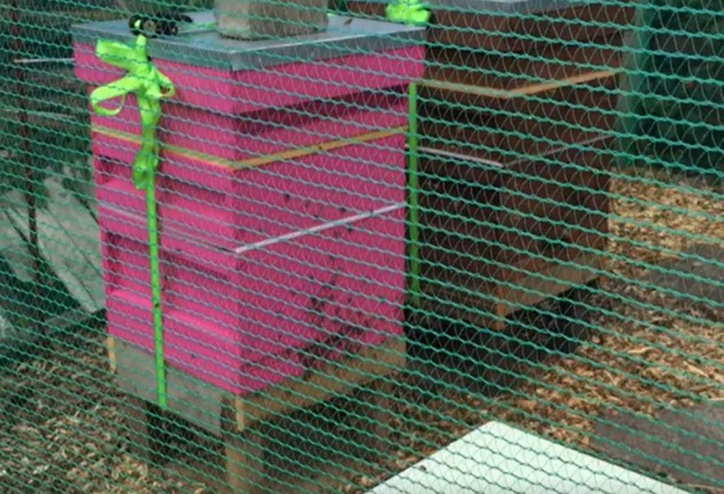 image showing a crowd of bees flying in front of the pink hive