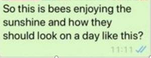 image showing a text message saying the bees are enjoying the sunshine