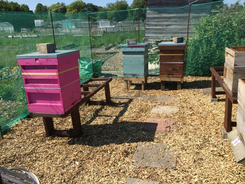 image showing the apiary wit hthe pink and brown hives and additonal green hive