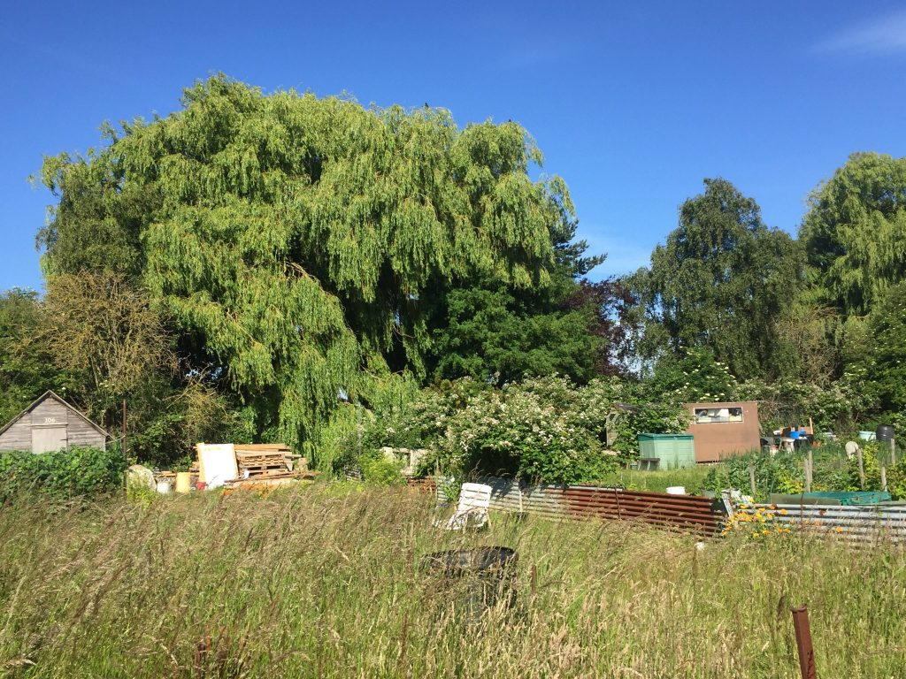 image showing a neglected area of the allotment site with trees in the background