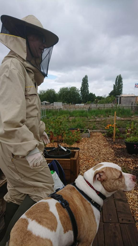 Image showing someone suited up to see the bees with a large dog beside them