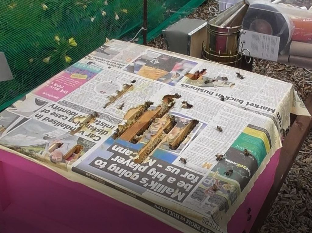 image showing the holes in the newspaper where the bees had eaten their way through