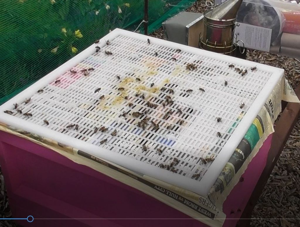 image showing the drones on the queen excluder between the pink and green brood boxes