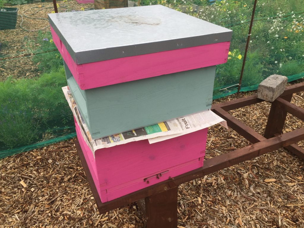 image showing the pink and green merged hives