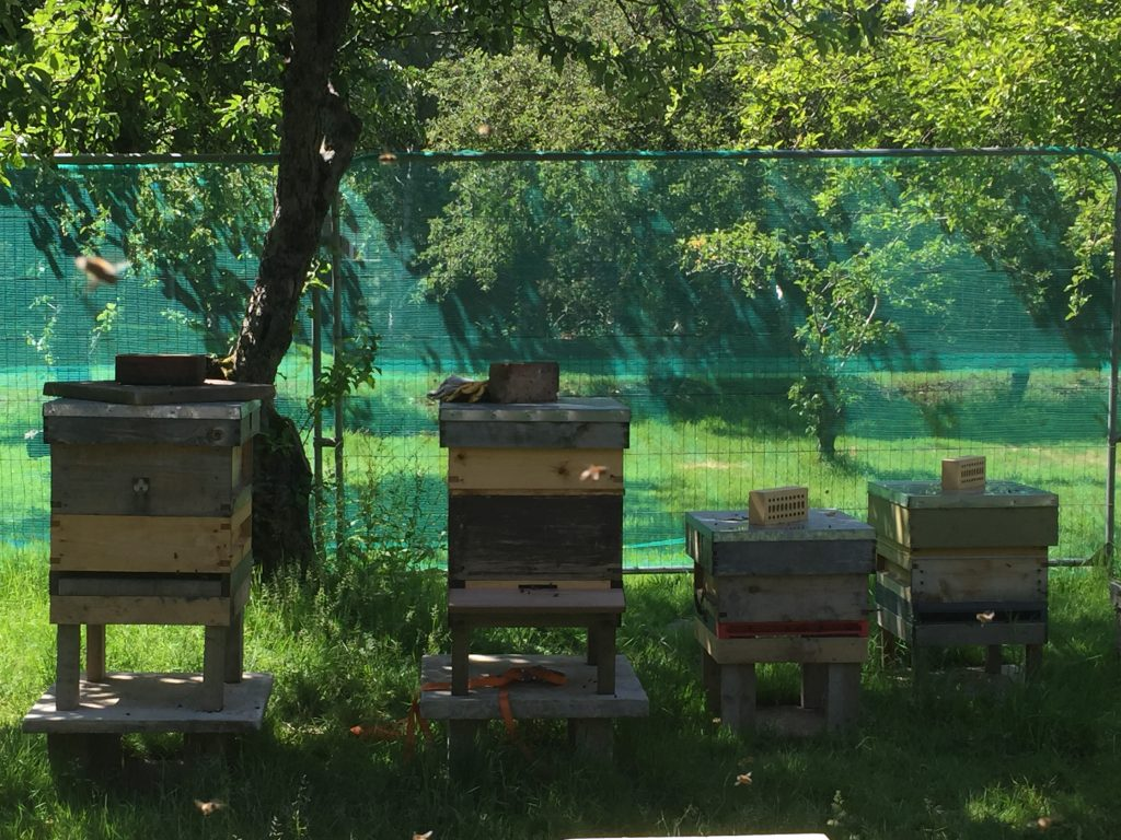 image showing Patrick's out-apiary in an orchard