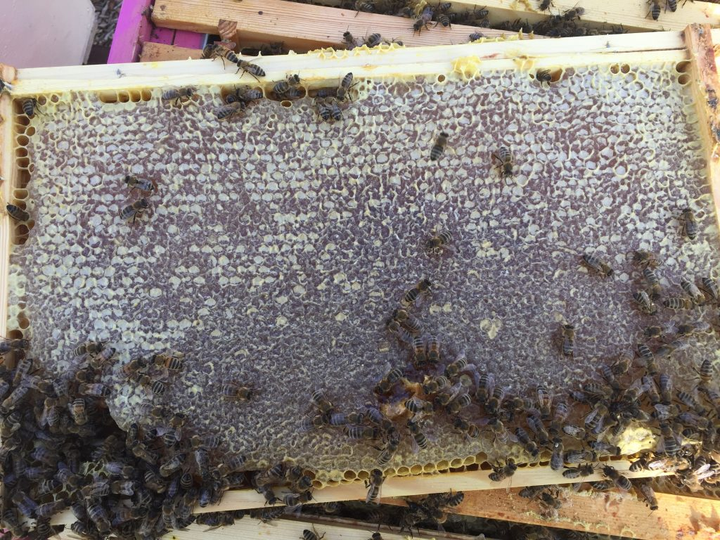 Image showing a frame of stores in the brood box