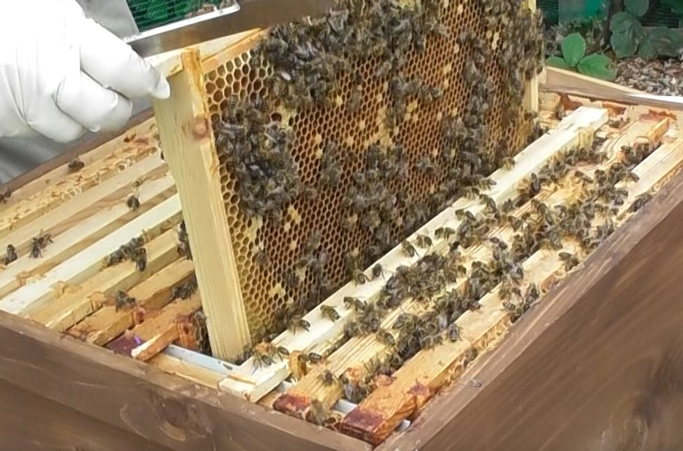 Image showing the selecting a frame from the brown hive for a donation to the pink hive