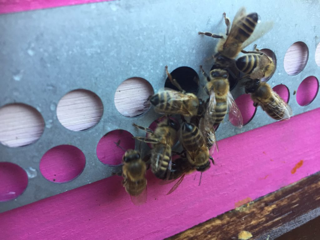image showing the bees returning through the entrance