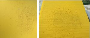 image showing the difference between the varroa boards